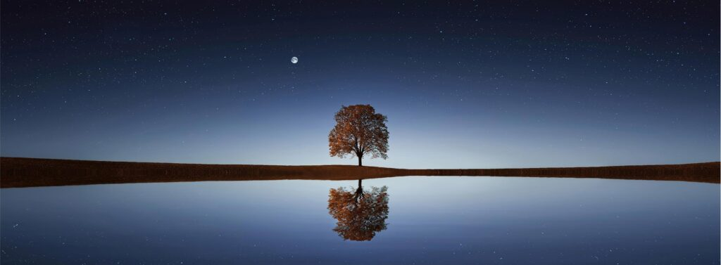 moon and tree beside still lake